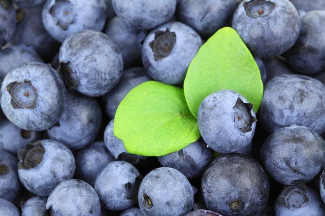 Beroende av blåbär